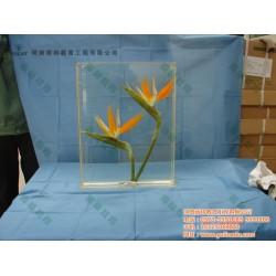菌类植物标本、标本、雨林教育