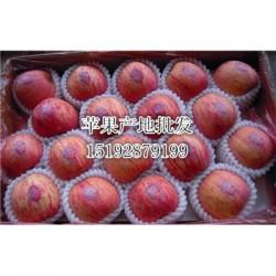 今 日 那里的红富士苹果条红种植价格