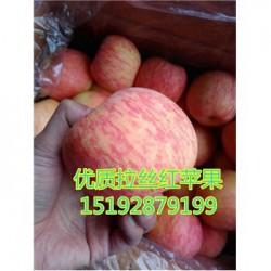 今 日 山东苹果产地膜袋红富士苹果农户价格