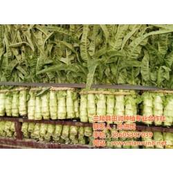 有机蔬菜,有机蔬菜批发,田润蔬菜批发(优质