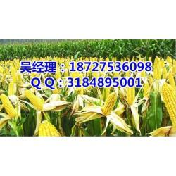 收购玉米|高价收购玉米|民发养殖(优质商家)