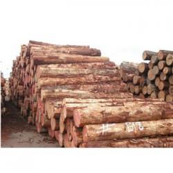 广西收购松木企业一览表