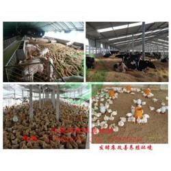 发酵床技术养羊怎么制做的 用欣圣源发酵床