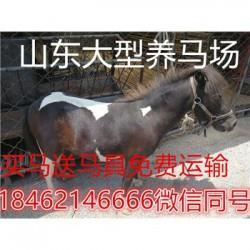 柳州德宝矮马那里的羊驼便宜