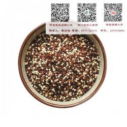 青海藜麦源头批发供应厂家|青海藜麦|【青海