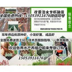 张北县哪里有龙虾苗卖—小龙虾育苗育种基地