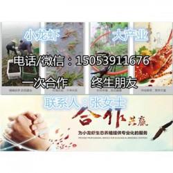 阿城淡水龙虾苗批发价格—种虾厂家出售价格