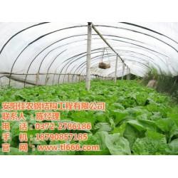 蔬菜温室,佳农大棚,蔬菜温室建造
