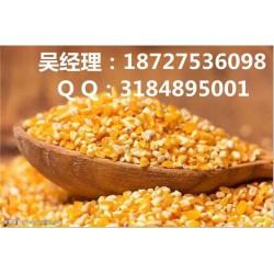 高价收购玉米、收购玉米、民发养殖