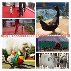 荆门市出租马戏团表演马戏团动物表演