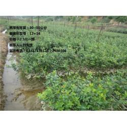 湖南油茶苗种植、【攸县新胜油茶专业合作社